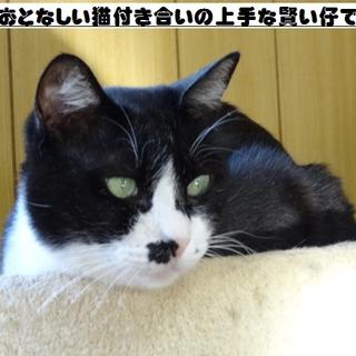 大人しくて猫付き合いの上手な賢い猫です!