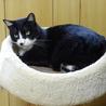 大人しくて猫付き合いの上手な賢い猫です! サムネイル2