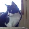 大人しくて猫付き合いの上手な賢い猫です! サムネイル4