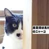 大人しくて猫付き合いの上手な賢い猫です! サムネイル5
