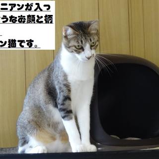 アビシニアンミックス?なイケメン猫です!