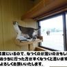 アビシニアンミックス?なイケメン猫です! サムネイル2