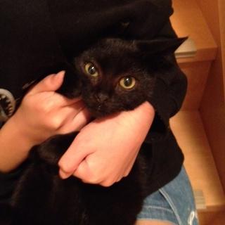 かわいい黒猫ロッド
