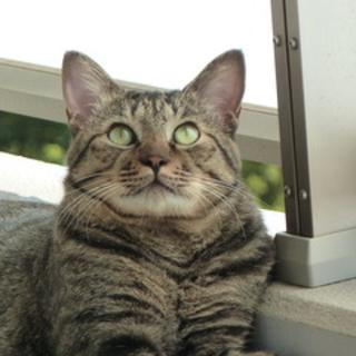 優しいイケ猫