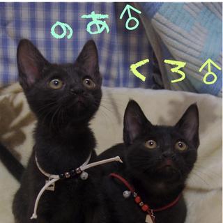 人懐っこい黒猫兄弟。