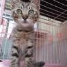 淡路島の子猫