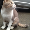 穏やかで甘えん坊な猫です