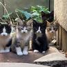 推定生後3ヶ月/子猫たちの里親募集