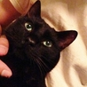 グリーンの瞳の黒太郎 サムネイル7