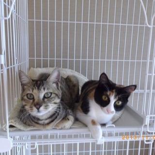 可愛い子猫姉妹の里親募集中
