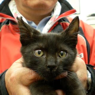 ゴロゴロ黒子猫のノア