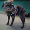 熊本県 八代保健所にいる犬です
