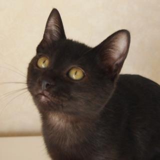 ちょっとシャイで大人しい黒猫の女の子