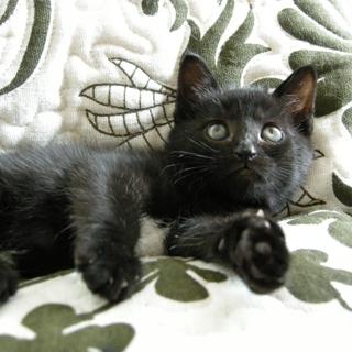 ちょっとシャイな黒猫の女の子