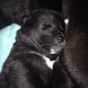 11月23日生まれ◆目開きたてオスの幼犬