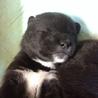 11月23日生まれ◆目開きたてメスの幼犬