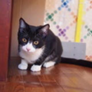 人間大好きお出迎え猫のアリスちゃん♀