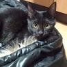 元気いっぱいな黒猫ちゃん!