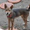 仔犬5か月MIX犬募集中