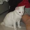 白子猫里親募集 サムネイル2