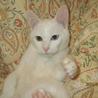 白子猫里親募集 サムネイル3