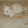 白子猫里親募集 サムネイル4