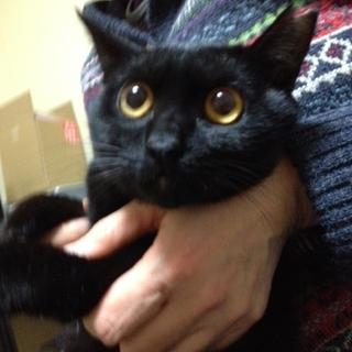 黒猫女の子♥優雅なノンちゃん♥手術済