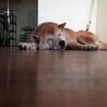 保健所から来た、やさしいおじいちゃん犬です サムネイル4