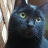 2度遺棄された人大好きっ子な黒猫ちゃん