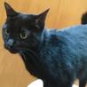 2度遺棄された人大好きっ子な黒猫ちゃん サムネイル3