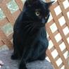 2度遺棄された人大好きっ子な黒猫ちゃん サムネイル2
