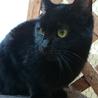 2度遺棄された人大好きっ子な黒猫ちゃん サムネイル4