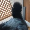2度遺棄された人大好きっ子な黒猫ちゃん サムネイル5