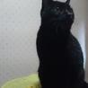 2度遺棄された人大好きっ子な黒猫ちゃん サムネイル6