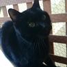 2度遺棄された人大好きっ子な黒猫ちゃん サムネイル7