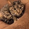 人懐こい成猫です。ワクチン避妊済み。