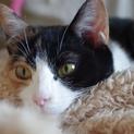 綺麗な三毛猫の女の子です。