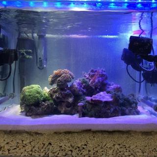 海水魚と珊瑚の里親