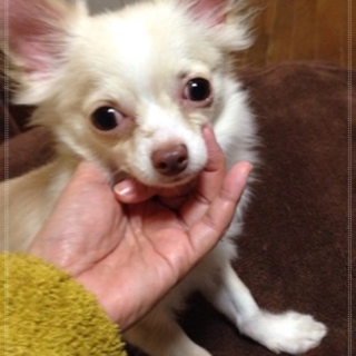 フレンドリーな子犬2キロ♂10ヵ月