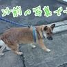 多頭飼育崩壊寸前のお宅の犬です! サムネイル6