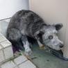 多頭飼育崩壊寸前のお宅の犬です! サムネイル2