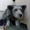 多頭飼育崩壊寸前のお宅の犬です! サムネイル3