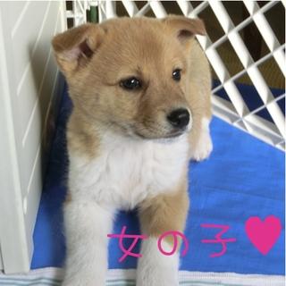 人懐っこく愛くるしい2ヶ月子犬家族募集!
