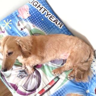 救いの手を…離婚の為、飼育困難、バーディ犬