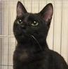 ポチたま会:小柄な美黒猫 花梨ちゃん