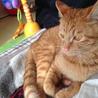 7ヶ月のオス猫です。