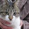 かわいいネコです。飼い主さん募集しています。