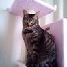 飼い主さんが亡くなった姫猫コロンを新しい家族に!