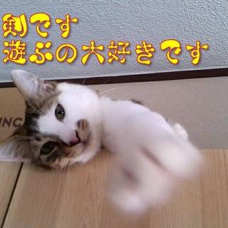 仮名、剣(けん) 男の子 8~9ヶ月