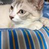 福島第一原発被害猫 仮名 るり メス サムネイル2